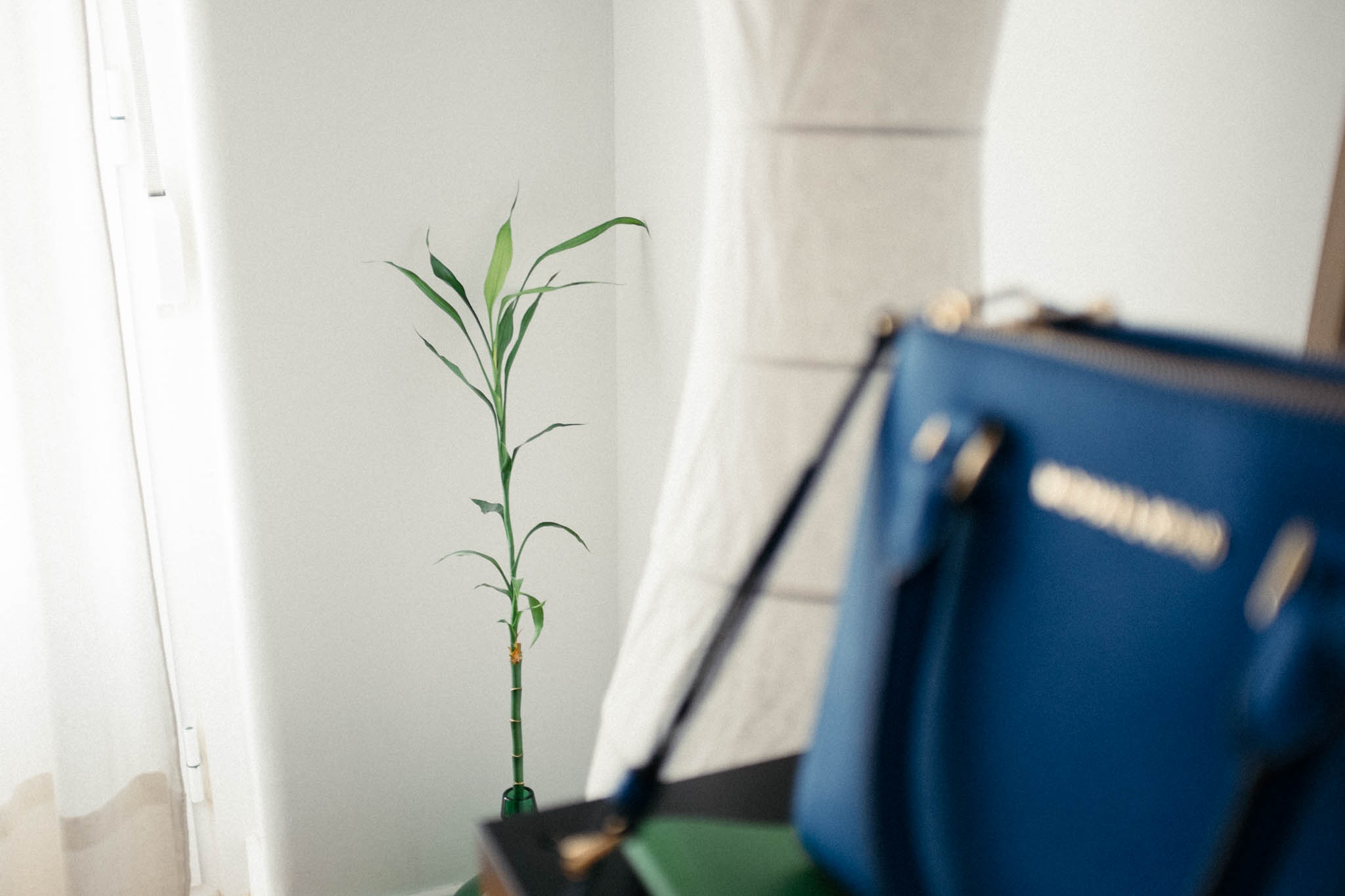 Our bamboo is growing as well.
